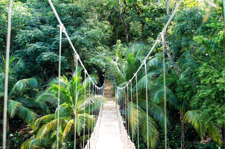 rainforest elopement ideas