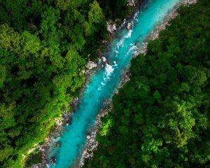best environmental documentaries