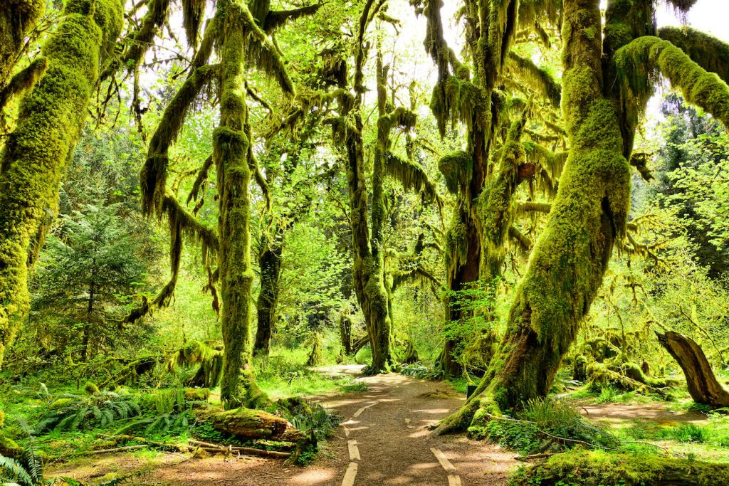 places to elope olympic national park hoh rainforest